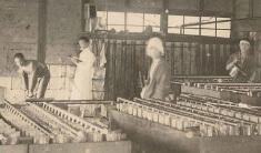 マルホン胡麻油の歴史 リンク